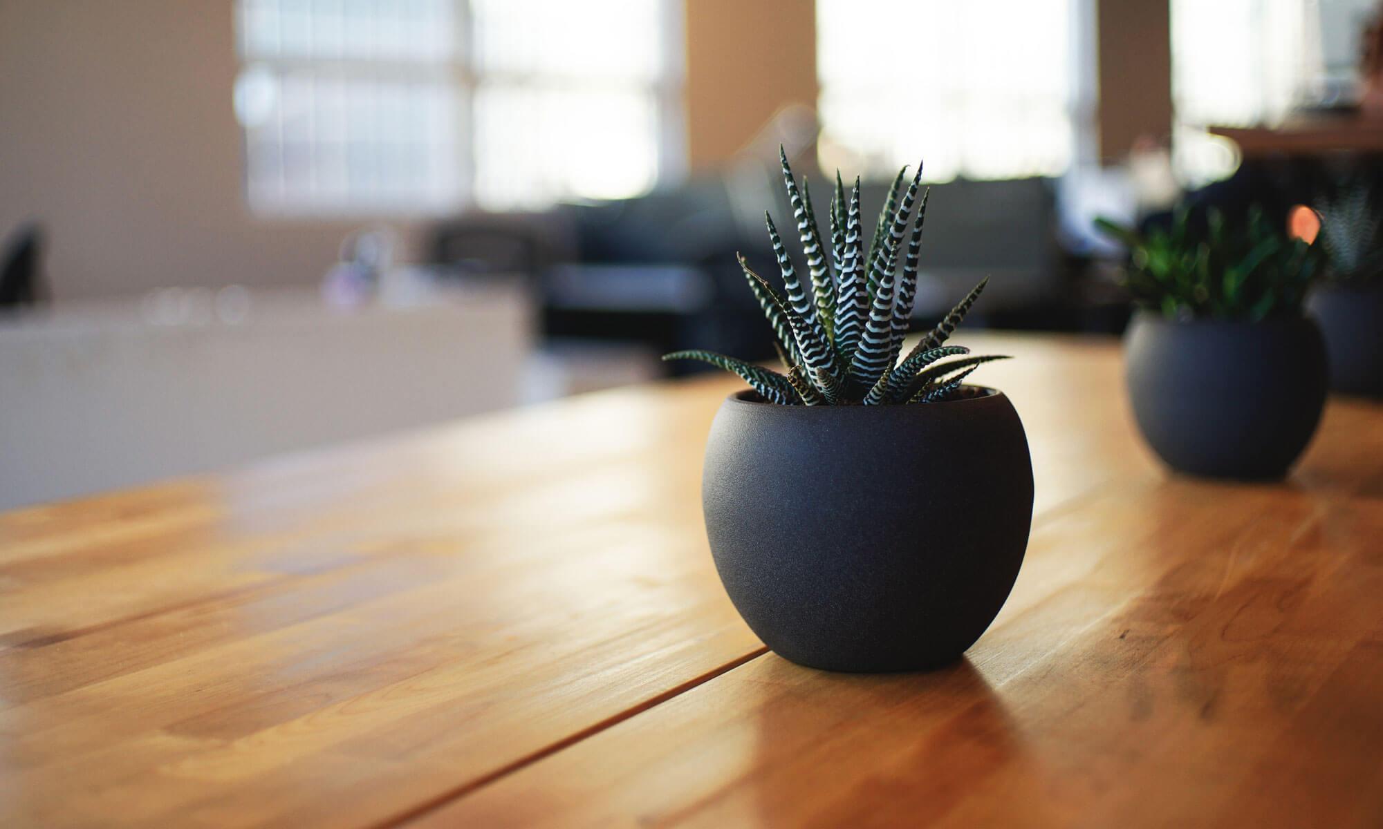 Plant Hire Company Dorset